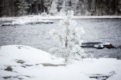 Small tree covered in snow Stock Photography