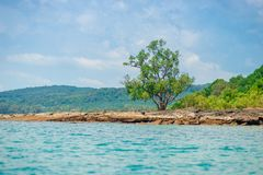 A small tree on a deserted rocky beach of a tropical uninhabited. Island Royalty Free Stock Photo