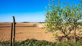 Small tree in the feild with farm cultivated land with potato in the background. Sunny day on farmland in Oensel south Limburg in the Netherlands Holland royalty free stock images