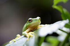 Small tree frog. Image of a small frog Stock Photo
