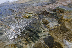 Small tree in geothermal features Stock Photography