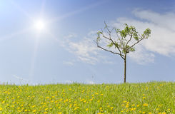 Small tree on a grassy hill Stock Photos