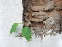 Small tree and green leaf growing through cement. Foliage growth on old concrete wall stock photos