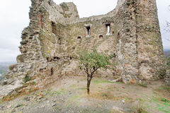 Small tree grew on ruins of an ancient temple with brick walls royalty free stock image