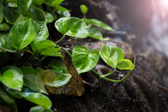Small tree grow on the wet soil Royalty Free Stock Images