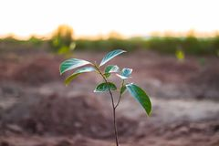 Small tree growing on ground. stock photography