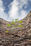 Small tree growing horizontally from the vertical wall Stock Photos