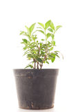 Small tree growing in plastic pots. Stock Photos