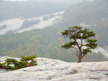Small tree growing on rock with mountain rocks in background Royalty Free Stock Photo