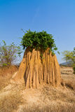 Small tree growing on strange shape dried soil erosion Stock Image