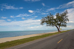 Small tree that grows close to the beach Royalty Free Stock Photos