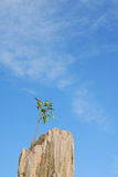 A small tree grows in the rock. A small tree grows in the strong rock stock image