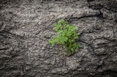 Small tree that grows in trees. Stock Photography
