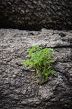 Small tree that grows in trees. Stock Photos