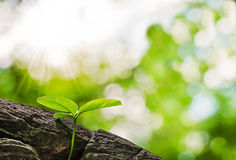 Small tree growth in forest Royalty Free Stock Photography
