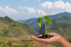Small tree on hand Stock Photo