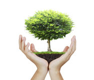 Small tree in  hand Stock Photo