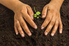 Small tree with Hands and soil  , soil background Royalty Free Stock Photography