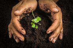 Small tree with Hands and soil  , soil background Stock Photography