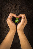 Small tree with Hands and soil  , soil background Stock Images