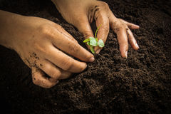 Small tree with Hands and soil  , soil background Stock Photo