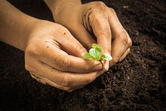 Small tree with Hands and soil  , soil background Stock Photos