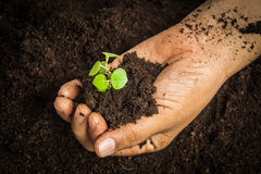Small tree with Hands and soil  , soil background Stock Image