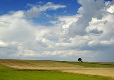 Small tree on the horizon in rural landscape. With blue sky Stock Photography