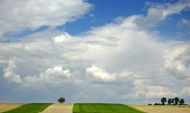 Small tree on the horizon in rural landscape. With blue sky Stock Photo