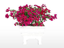 Small tree image, graphic work surface. Flowering flower in the pot through cuttings available for cutting. On your design Stock Photo
