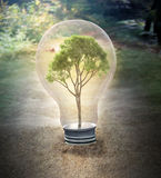 Small tree inside a bulb - stock illustration