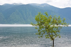 Small tree at the lake Royalty Free Stock Images