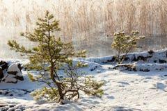 Small tree at lakeside warm winter sunlight Stock Photo
