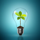 Small tree in a light bulb Stock Photography
