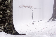 Small tree in the middle of forest in winter time, mystic atmosh Stock Photo