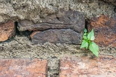 Small tree on an old brick wallop. Small tree on an old brick wall Stock Images