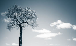 Small tree over blue sky background Stock Image