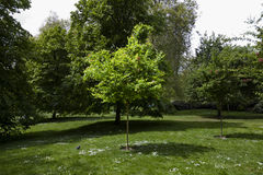 Small tree in the park spot lit by sun Royalty Free Stock Images