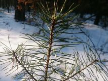 Small tree Royalty Free Stock Image