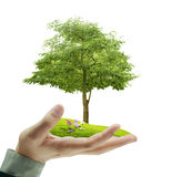 Small tree, plant in  hand Stock Image