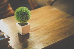 Small tree potted. Inspiration on tree pot warm tone , wood table , book , magazines , green , tree Stock Photo