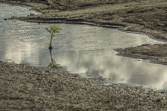 Small tree reflection at Punta Jesus Maria, Ometepe Island stock photo
