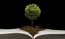 Small tree representing knowledge and wisdom stock images