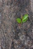 Small tree. It's small tree of tree Royalty Free Stock Photo