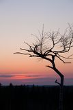 Small tree silhouette after sunset Stock Photos