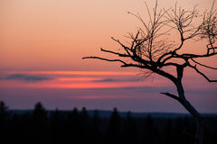 Small tree silhouette after sunset Royalty Free Stock Photos
