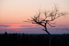Small tree silhouette after sunset Stock Photography