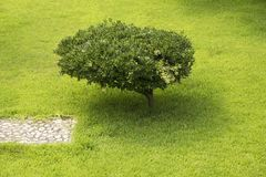 Small tree stock images