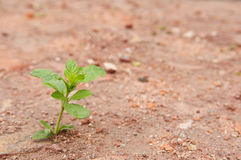 Small tree in the soil Stock Images