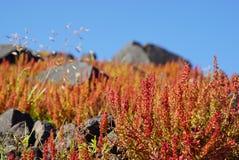 Small tree in spring at Nea Kameni island,Santorini. Stock Photography